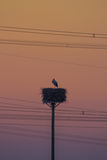 Stork, Sunset and Power Lines Royalty Free Stock Photo
