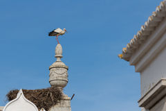 A stork on top of a monument in Faro, Algarve Royalty Free Stock Photos