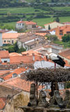 Stork in Trujillo Extremedura Spain Royalty Free Stock Images