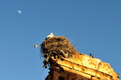 Stork under the moon. A stork in its nest on ruins of an old wall in Marrakech - Morocco Stock Images