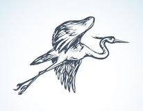 Stork. Vector drawing Stock Image