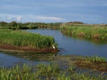 Stork wading. Stock Image