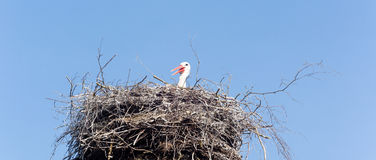 Stork waiting in its nest Stock Image