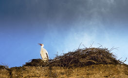 Stork waits beside nest, on ancient wall in Marrakesh, Morocco. Blue sky. Copy space. Stock Images