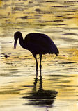 Stork on the water Stock Photos