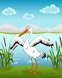 Stork  on the waterside Stock Images