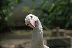 Stork Stock Images