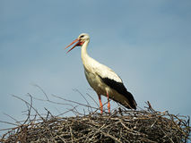 Stork Royalty Free Stock Photos