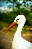 Stork white with a red beak bringing children Royalty Free Stock Photo
