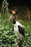 Stork wild life Stock Photos