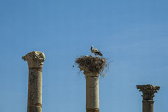 Stork with young on an ancient column Royalty Free Stock Image