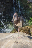 Stork in a zoo in Fuengirola Royalty Free Stock Images