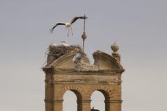 Storkar Arkivfoto