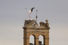 Storkar Arkivbilder