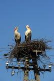 Storkar Fotografering för Bildbyråer
