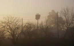 Storkar bygga bo på bakgrunden av trådar och träd Dimmig gryning i byn royaltyfri fotografi
