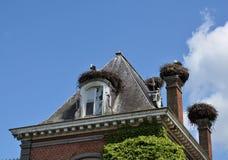 Storkar bygga bo på taket Arkivfoto