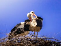 Storkar i dess rede på blå himmel royaltyfri illustrationer