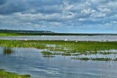Storkar på havet Fotografering för Bildbyråer