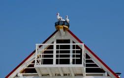 Storkar på taket Royaltyfri Bild