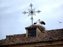 Storkar på taket av ett lantligt hus Arkivbilder