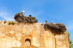 Storkar som står i deras reden på väggen royaltyfri foto