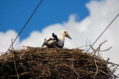 Storken behandla som ett barn Royaltyfri Fotografi