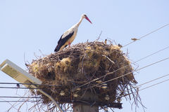 Storken bygga bo in Royaltyfria Bilder