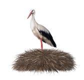 Storken i dess bygga bo. Fjädra Royaltyfri Foto