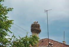 Storken med behandla som ett barn fåglar Royaltyfri Foto