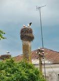 Storken med behandla som ett barn fåglar Royaltyfri Bild