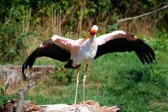 Storken med huvudet rymde höjdpunkt Fotografering för Bildbyråer