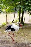 Storken på det löst parkerar fältet Royaltyfri Foto