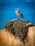 Storknest on the el baddi palace,marrakech,morocco. Stork nesting on top of  the el baddi palace in marrakesh,morocco Stock Image
