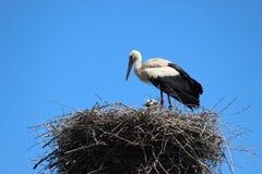 storks Arkivbilder