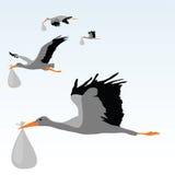 Storks. Vector illustration of four storks Royalty Free Stock Image