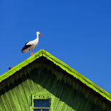 Storks Stock Photos