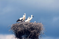Storks on a background of blue sky Stock Image