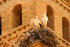 Storks On Church Tower Royalty Free Stock Images