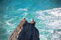 Storks on a Cliff at Western Coast of Portugal Royalty Free Stock Image