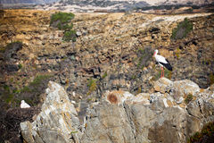 Storks on a Cliff at Western Coast of Portugal Stock Photo