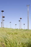 Storks colony Royalty Free Stock Photo
