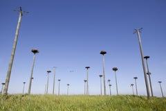 Storks colony Stock Photography