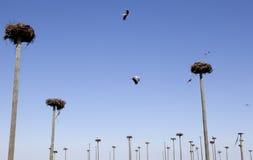 Storks colony Stock Photo