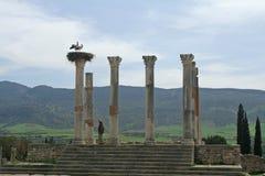 Storks couple on ancient roman Stock Photos