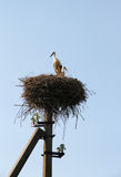 Storks couple in a nest. Family and fidelity symbol. Stock Photography