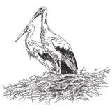 Storks couple in the nest vector illustratoin Stock Image