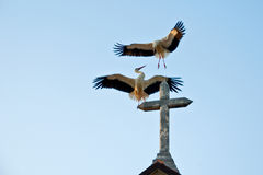 Storks on the curch Stock Images