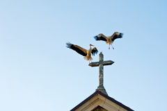 Storks on the curch 2 Royalty Free Stock Photo