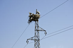 Storks on electric pole. Five storks in their nest on electric pole Stock Photo